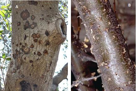 fig2 tree damage