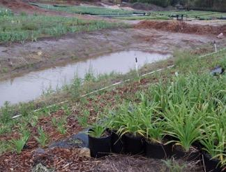 Fig. 6. A sediment basin temporarily detains sediment-laden runoff under quiescent conditions, allowing sediment to settle out.  Photo: J.P. Newman.