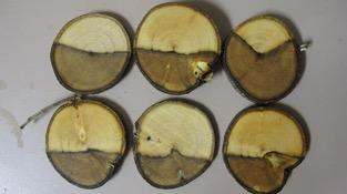 Fig. 4.  Discolored wood of Ficus microcarpa infected with Botryosphaeria spp. Photo: A J Downer.